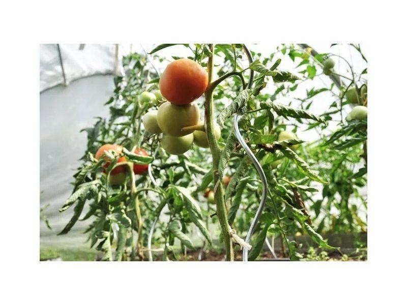 Spiralne podpory do pomidorów 170 cm